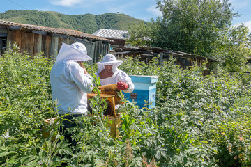 Two beekeepers work in the apiary