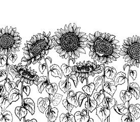 Set of hand drawn Graphic sunflower vintage sketch line