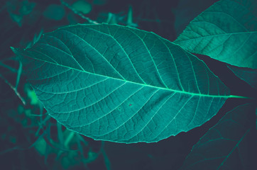 Fototapete - Focused green leaf in forest. Nature exotic illustration