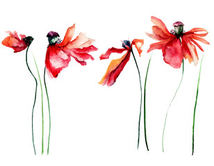 Set of red Poppies flowers