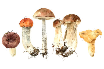 Hand drawn watercolor mushrooms