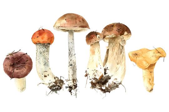 Hand drawn watercolor mushrooms