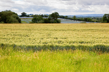 Rural views in Oxfordshire, England, barley fields, blue linseed farm on the background, selective focus