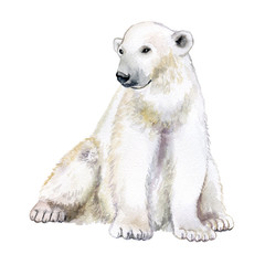 Polar bear. Watercolor illustration isolated on white background. Watercolor illustration, sketch animal. Cute wild bear.