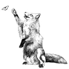 a Fox on its hind legs catches on the hunt for the butterfly, sketch vector graphics black and white drawing