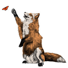 a Fox on its hind legs catches on the hunt for the butterfly, sketch vector graphics color picture
