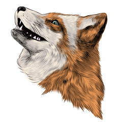 Fox face sketch vector graphics color picture