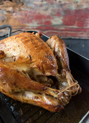 Thanksgiving turkey in roasting pan
