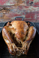 Turkey in roasting pan facing away in rustic setting