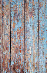 Wooden background of an old tree with cracked blue and white paint vertical