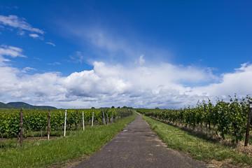 Weg zwischen Weinberge