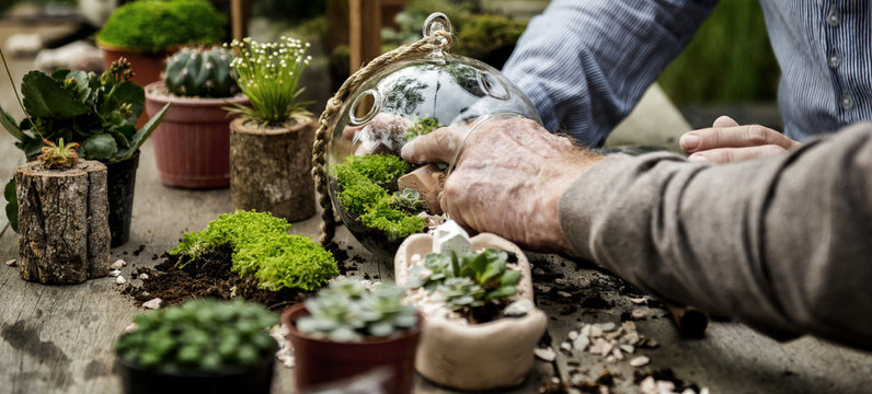 Botanical Environment Greenery Pottery Nature