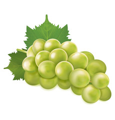 Green grapes bunch. Vector illustration
