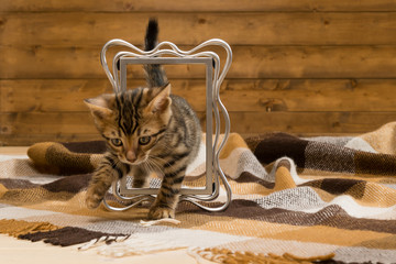 Bengal kittens play on a checkered blanket with a photo frame