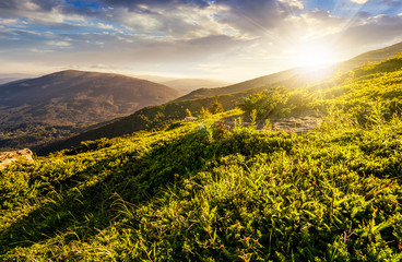 grassy hillside  in Carpathian mountains at sunset