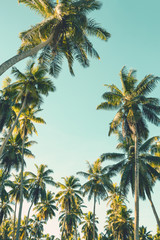 Coconut palm trees on sky background.   Low Angle View. Toned image