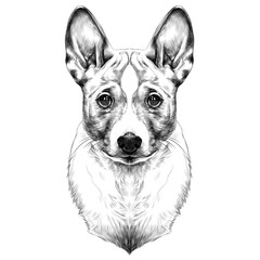 the dog breed Basenji head sketch vector graphics black and white drawing