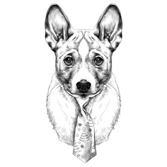 the dog breed Basenji head with a Christmas tie sketch vector graphics black and white drawing
