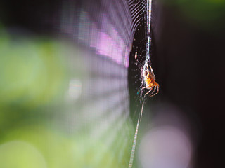 Spider on his net with soft background focus