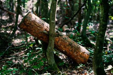 Baum eingeklemmt