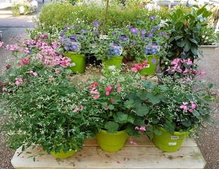 Plantes de saisons