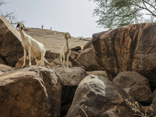 A cliff in Yendouma to the Dogon village of Youga Piri. Pays Dogon, Mali