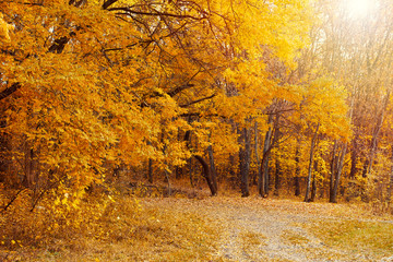 Beautiful scene of lonely trail in golden autumn forest. Concept of environment protection and ecology.