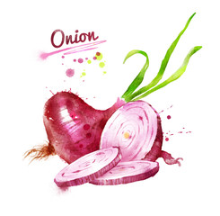 Watercolor illustration of red onion