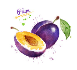 Watercolor illustration of plum