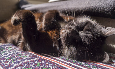 a cat enjoying the sun on it's back while laying on a couch
