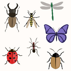 Set of various insects design flat.