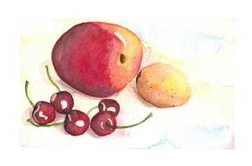 Watercolor hand drawn sketch illustration of Peach, apricot and sweet cherry art