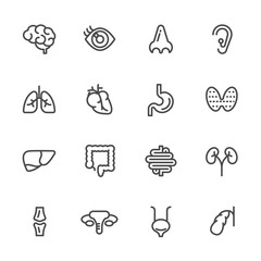 Visceral and anatomy icons, Vector line icons set