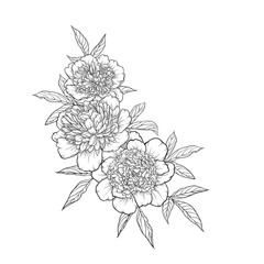 beautiful monochrome black and white bouquet peony isolated on background. Hand-drawn.