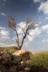 A Tree in Desert, Khorasan Razavi, Iran