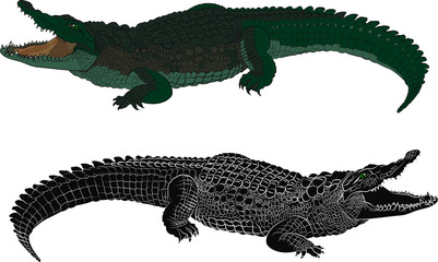 Crocodile color and black silhouette