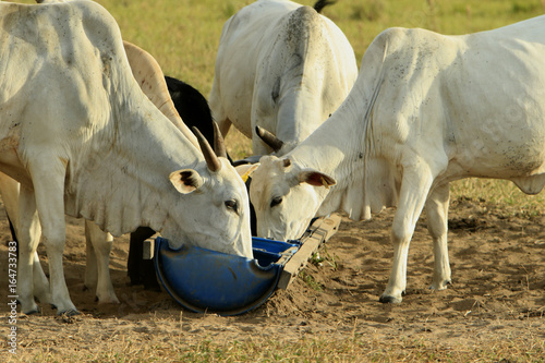 Fazenda de gado