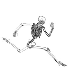 Human skeleton running isolated over white background vector illustration