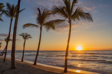 Hawaiian sunset as seen from a  beach with palm trees in silhouette