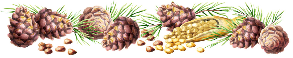 Сedar nuts and cones panoramic image. Watercolor hand-drawn illustration