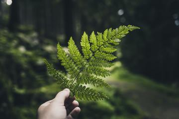 Ein Blatt Farn in der Hand im mystischen Wald