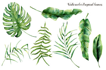 Watercolor set with tropical leaves. Hand painted palm branch, fern and leaf of magnolia. Tropic plant isolated on white background. Botanical illustration. For design, print or background