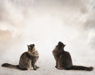 Two Cats on a Light Background