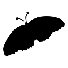 Black silhouette of a moth on a white background
