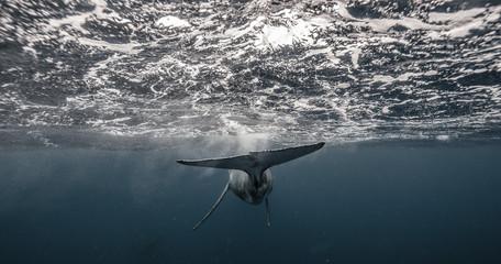 Whale Swim Away