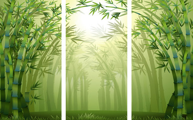 Bamboo forest scenes with mist