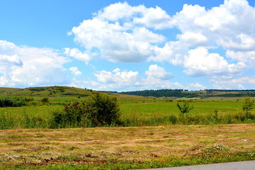Typical rural landscape in the plains of Transylvania, Romania. Green landscape in the midsummer, in a sunny day. Corn field.