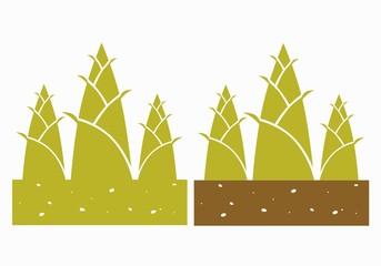 bamboo shoots,vector illustration