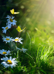 Foto op Plexiglas Pistache art abstract spring background or summer background with fresh flowers and butterfly