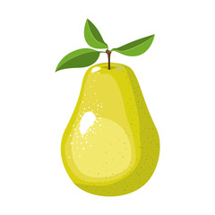 white background with realistic pear fruit vector illustration